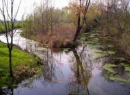 Park Swamp of Onara
