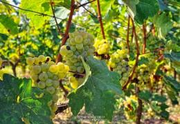 Zitsa's wineries