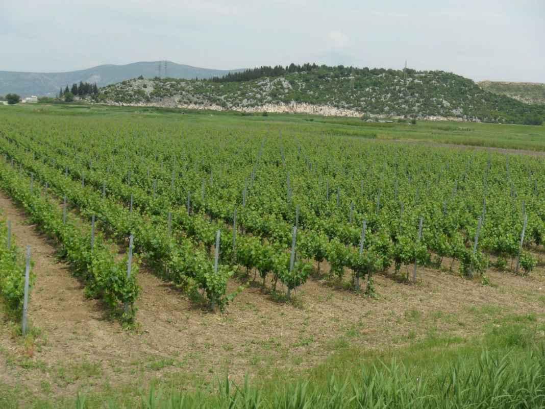Veraja winery